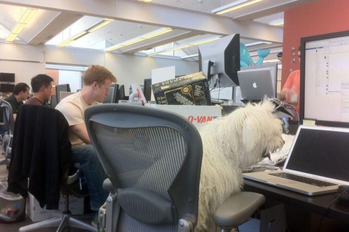 No le desagrada ir a trabajar a Facebook. Foto:facebook.com/beast.the.dog. Imagen Por:
