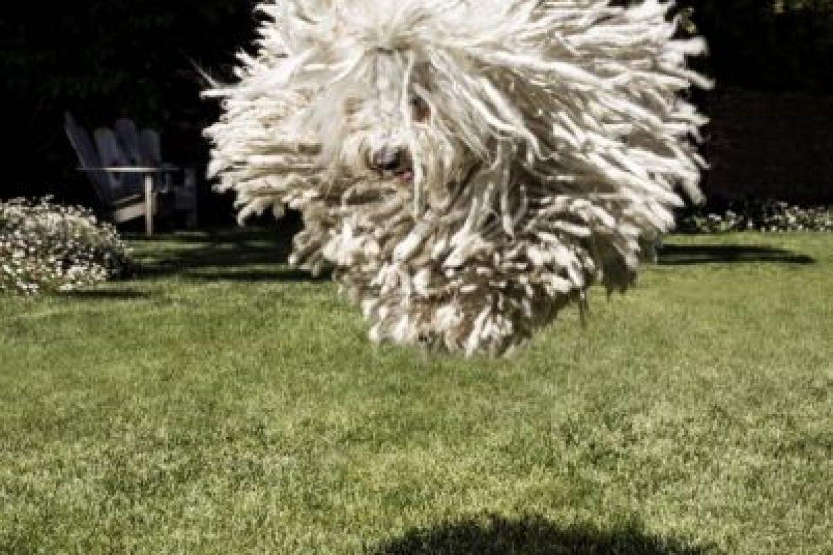 Parece flotar en el aire. Foto:facebook.com/zuck. Imagen Por: