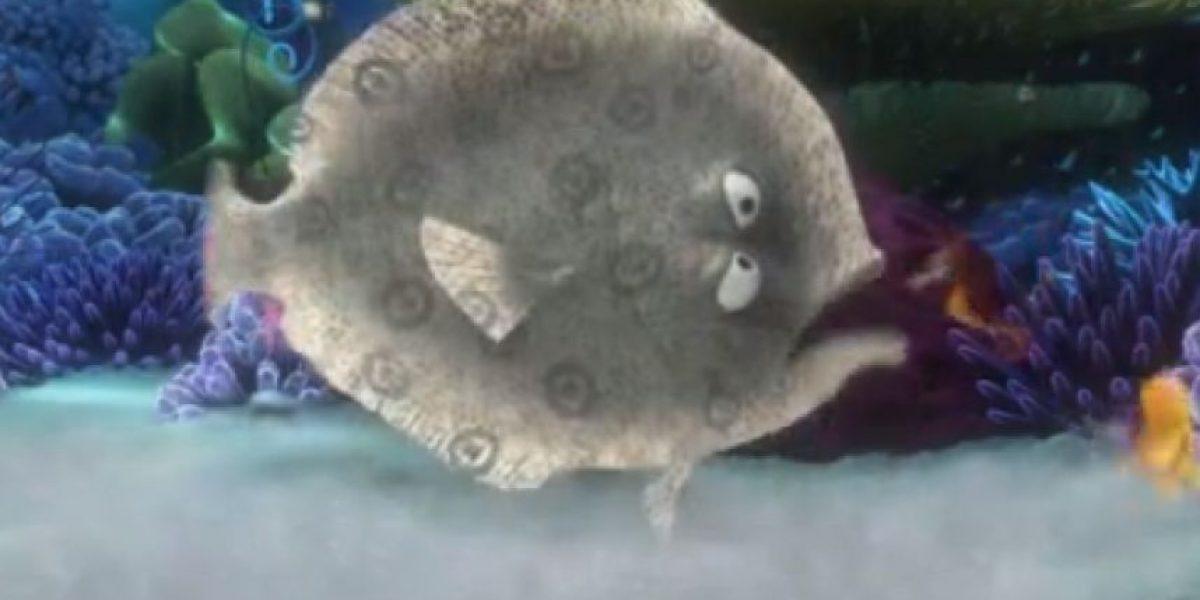 ¿Por qué todos hablan de un pez plano en la PSU?