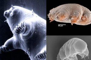 Pueden pasar hasta 10 años sin tener agua en su cuerpo. Foto:Wikimedia. Imagen Por: