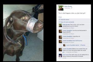 El perro era un labrador color chocolate. Foto:Vía Twitter. Imagen Por: