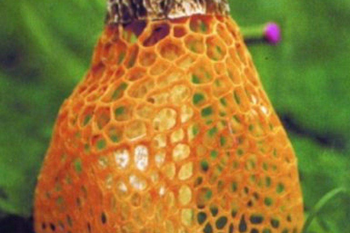 Con solo olerlo provoca multiorgasmos. Foto:Wikimedia. Imagen Por: