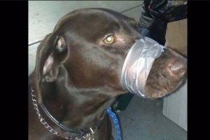 Para supuestamente callar a su perro decidió atar el hocico del animal con cinta adhesiva. Foto:Vía Twitter. Imagen Por: