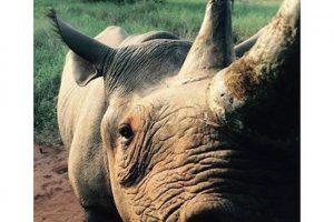 Zawadi, una rinoceronte hembra que ha conocido a los hermanos de la realeza británica: Harry y William Foto:Instagram.com/KensingtonRoyal. Imagen Por: