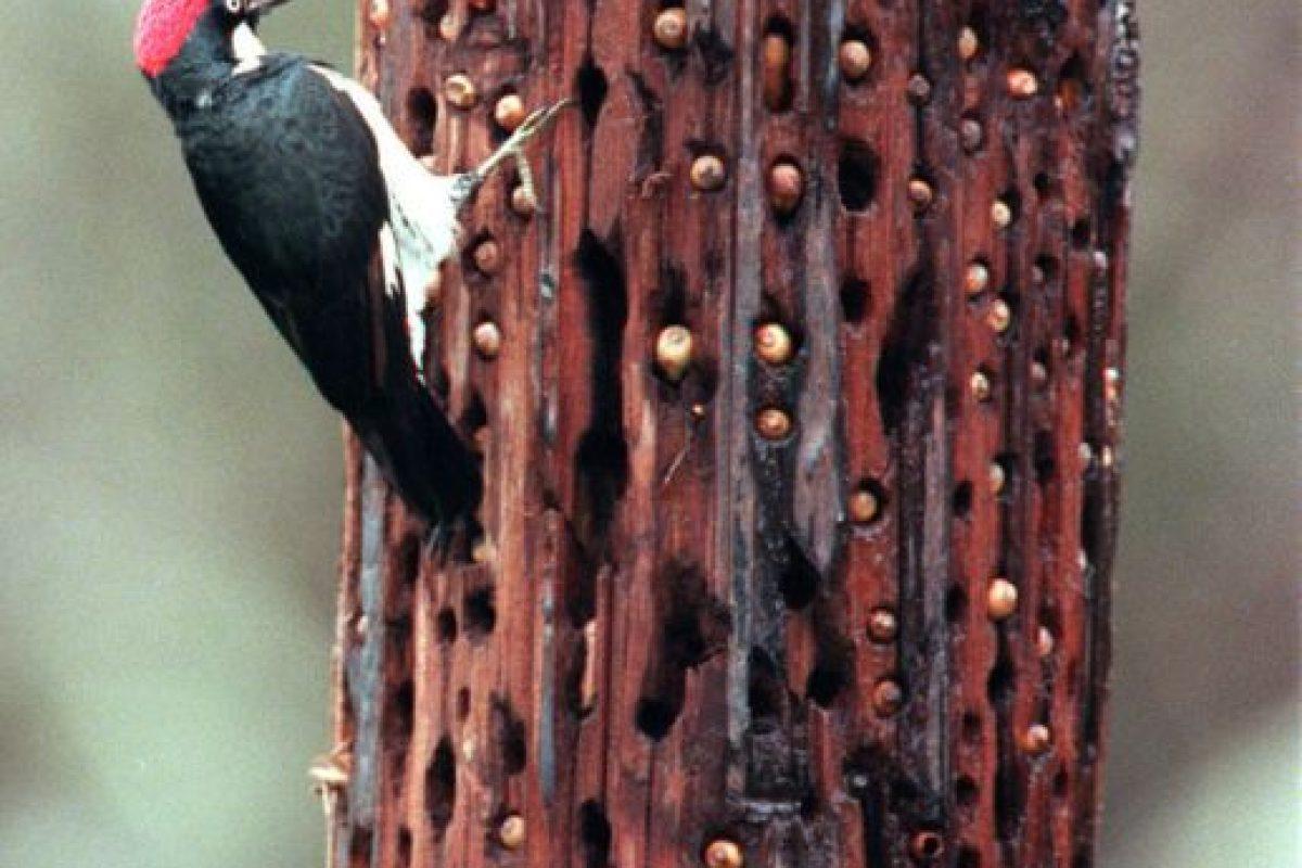 Según el sitio Tripofobia.com, esto sería un mecanismo de defensa. Foto:vía Imgur. Imagen Por: