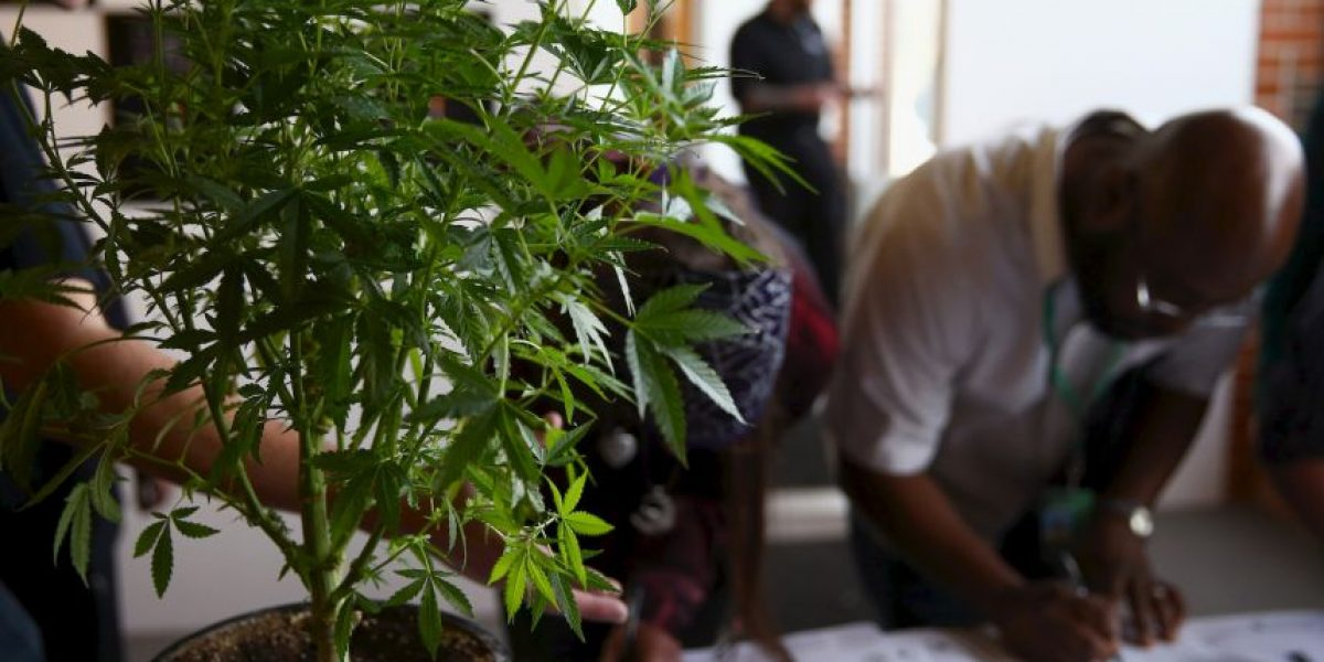 Hombre recibe condena de un dólar por poseer 30 plantas de marihuana