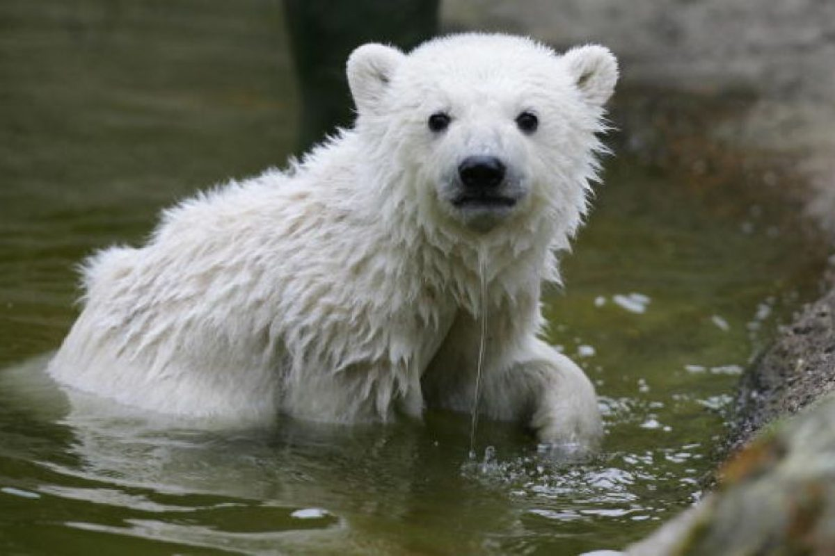 3 cosas que no podrán hacer en el futuro debido al cambio climático Foto:Getty Images. Imagen Por: