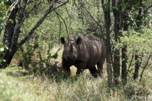 Por eso pidió apoyar a las organizaciones que buscan impedir la caza Foto:Twitter.com/KensingtonRoyal. Imagen Por: