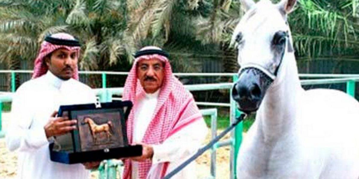 Insólito: ejecutarán a lujoso caballo de carreras por ser homosexual