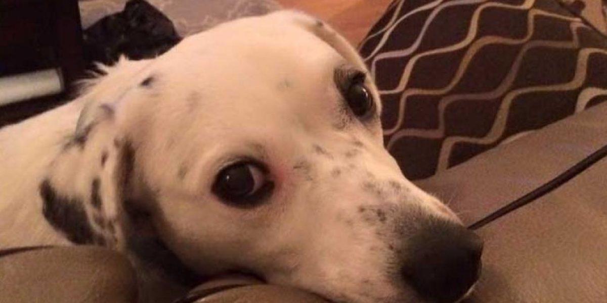 La conmovedora historia de la perrita abandonada por ser demasiado cariñosa