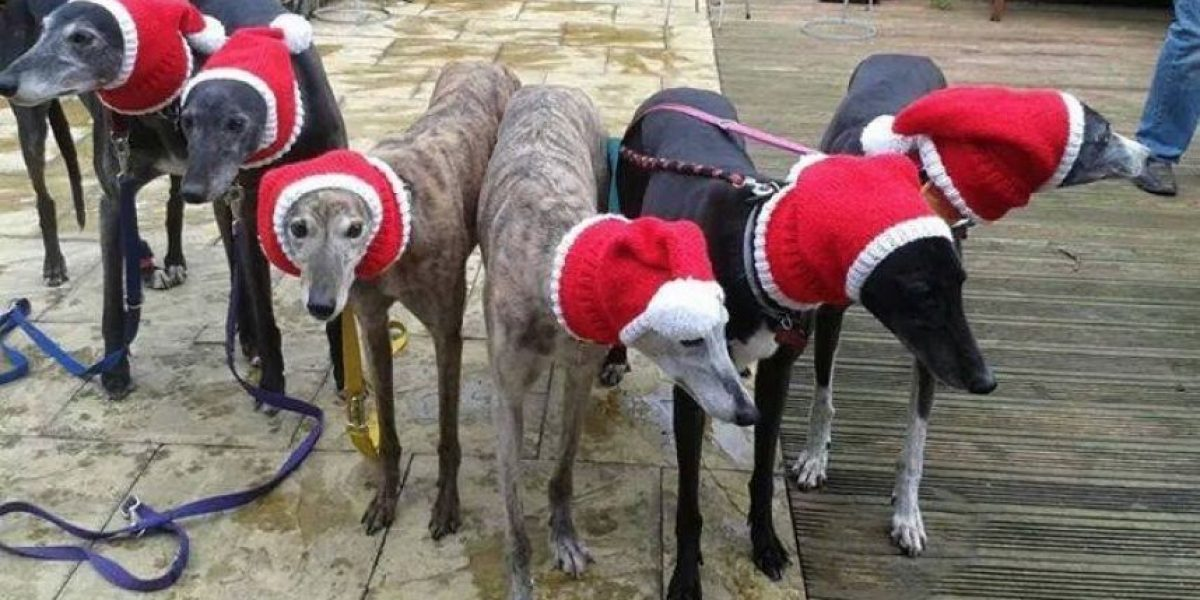 ¡Se pasó! Inglesa confecciona ropa para perritos que viven en la calle