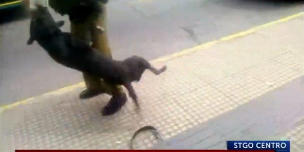 Violento perro callejero atacó a tres transeúntes y un carabinero en la Alameda