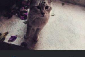 Crema Foto:Instagram. Imagen Por: