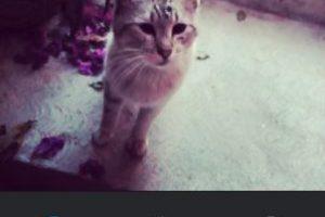 Amaro Foto:Instagram. Imagen Por:
