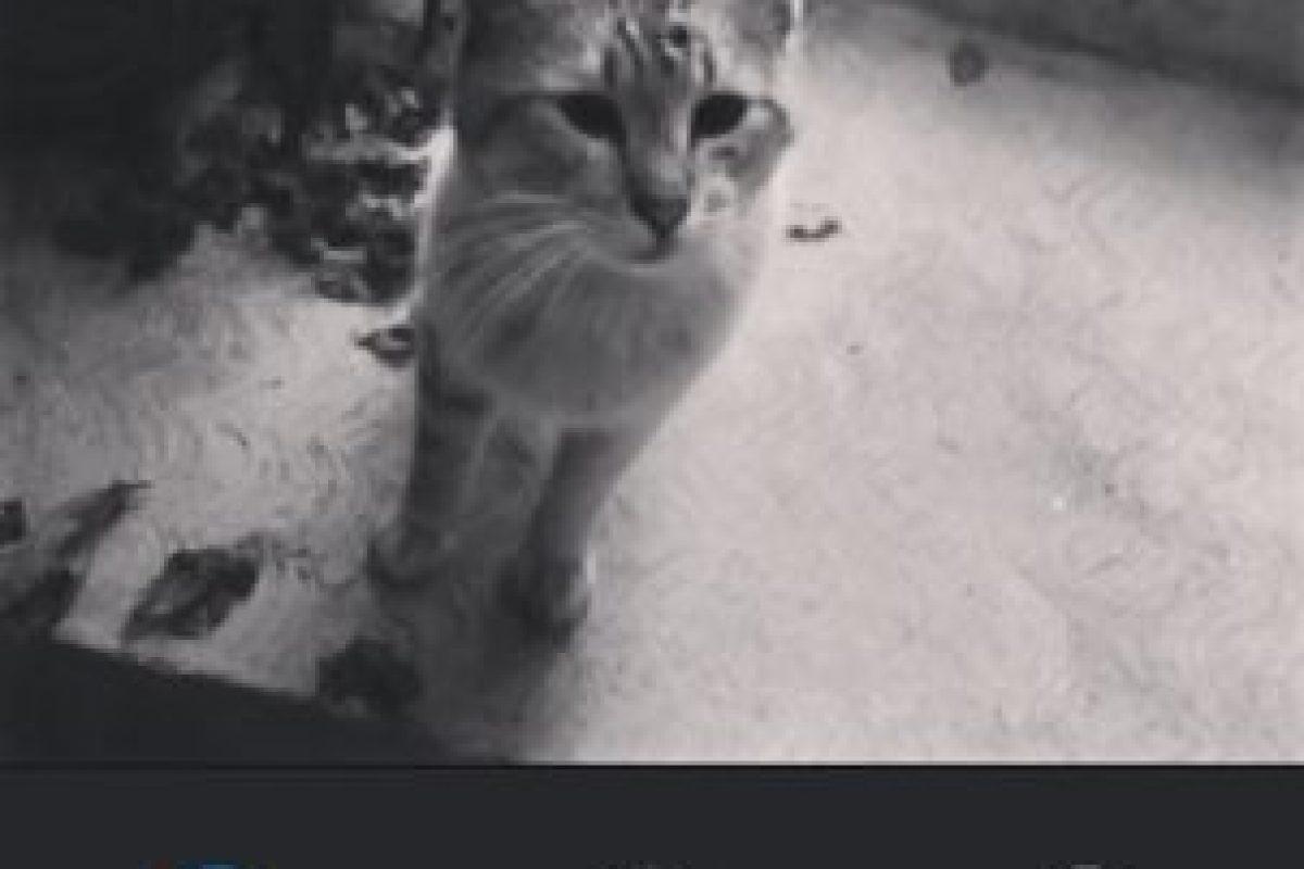 Willow Foto:Instagram. Imagen Por: