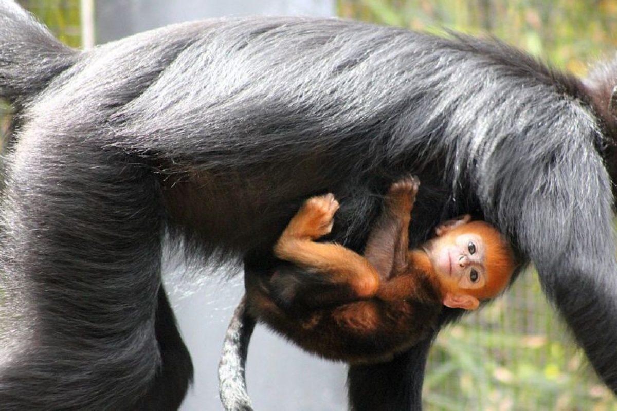 El zoológico aseguró que Nangua se encuentra en buen estado de salud. Foto:Vía Facebook.com/tarongazoo. Imagen Por: