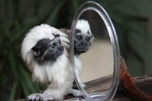 Este ejemplar en particular vive en el Zoológico Taronga. Foto:Vía Facebook.com/tarongazoo. Imagen Por:
