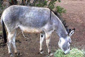 El animal duró 2 días con ellos. Foto:Vía Wikipedia.org. Imagen Por: