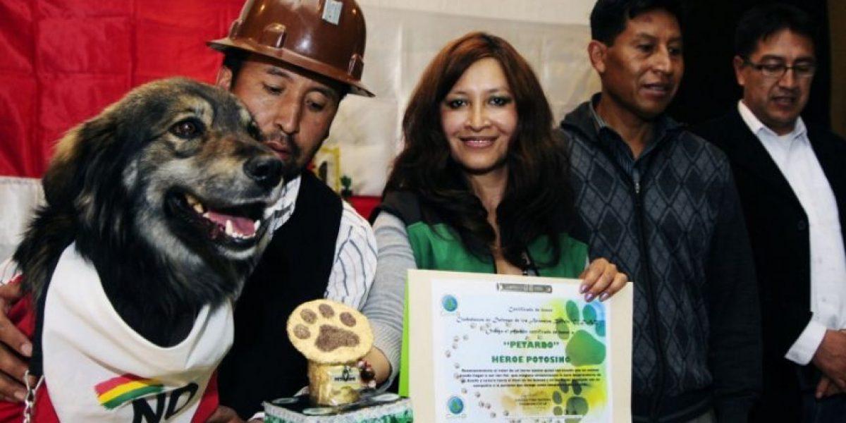 Conoce la historia de Petardo: el perro símbolo del No a la reelección en Bolivia