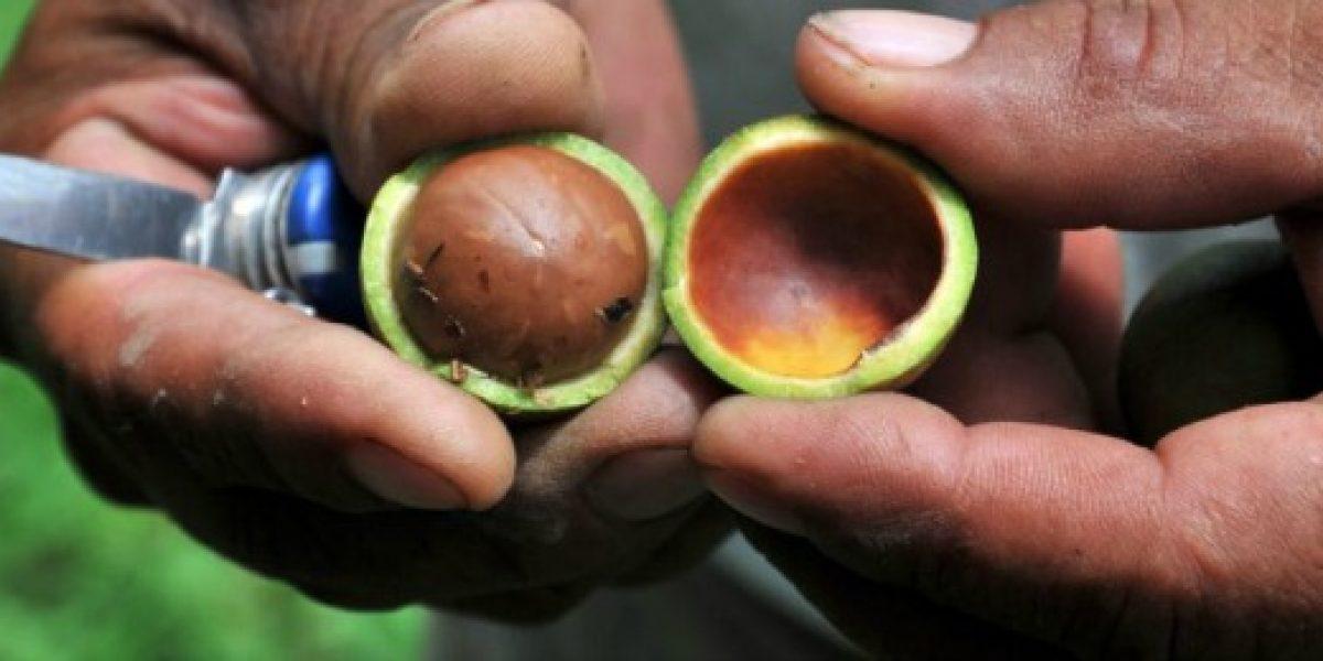 Este es el top ten de los alimentos más caros del mundo