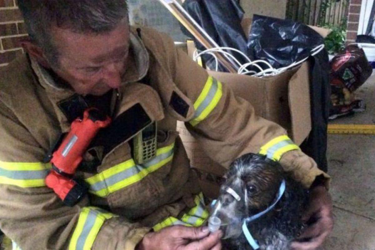 Cuando controlaron el fuego, pudieron encontrar al cachorro. Foto:Vía facebook.com/Melbourne.MFB. Imagen Por: