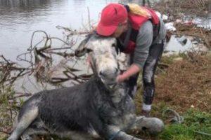 Foto:Reproducción / Facebook Animal Heaven Animal Rescue. Imagen Por: