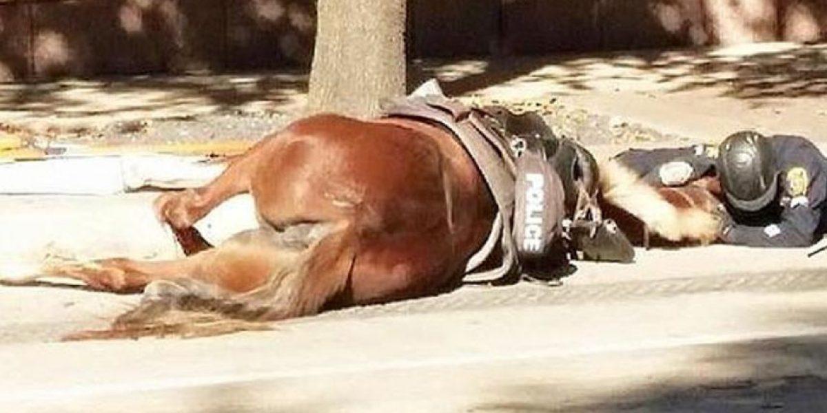 La emotiva imagen de policía llorando a caballo agonizante que da la vuelta al mundo
