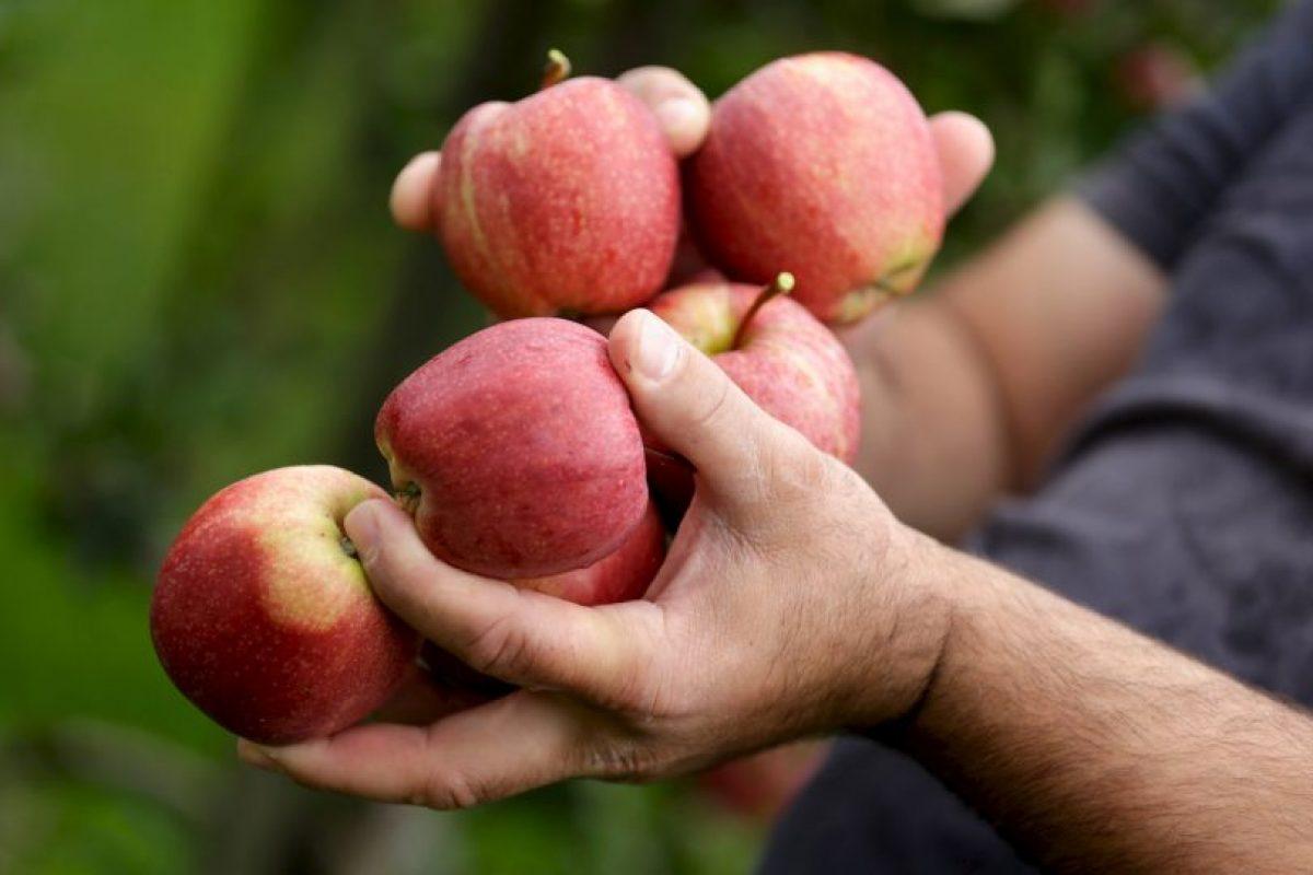 4. El precio de un kilogramo de manzanas (2.20 libras) Foto:Getty Images. Imagen Por: