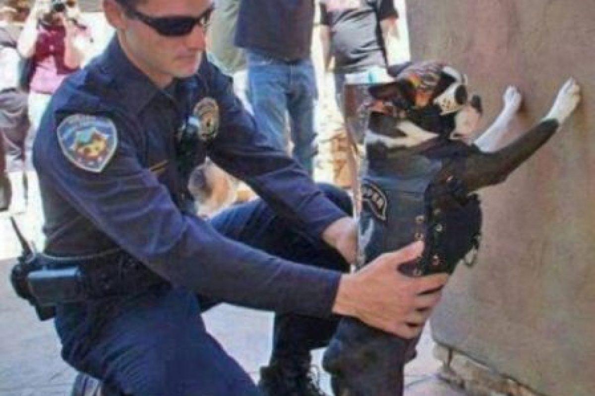 Ladrones en situaciones peculiares Foto:Imgur. Imagen Por: