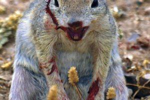 Imágenes que demuestran que las ardillas no son tan adorables Foto:Vía Tumblr. Imagen Por: