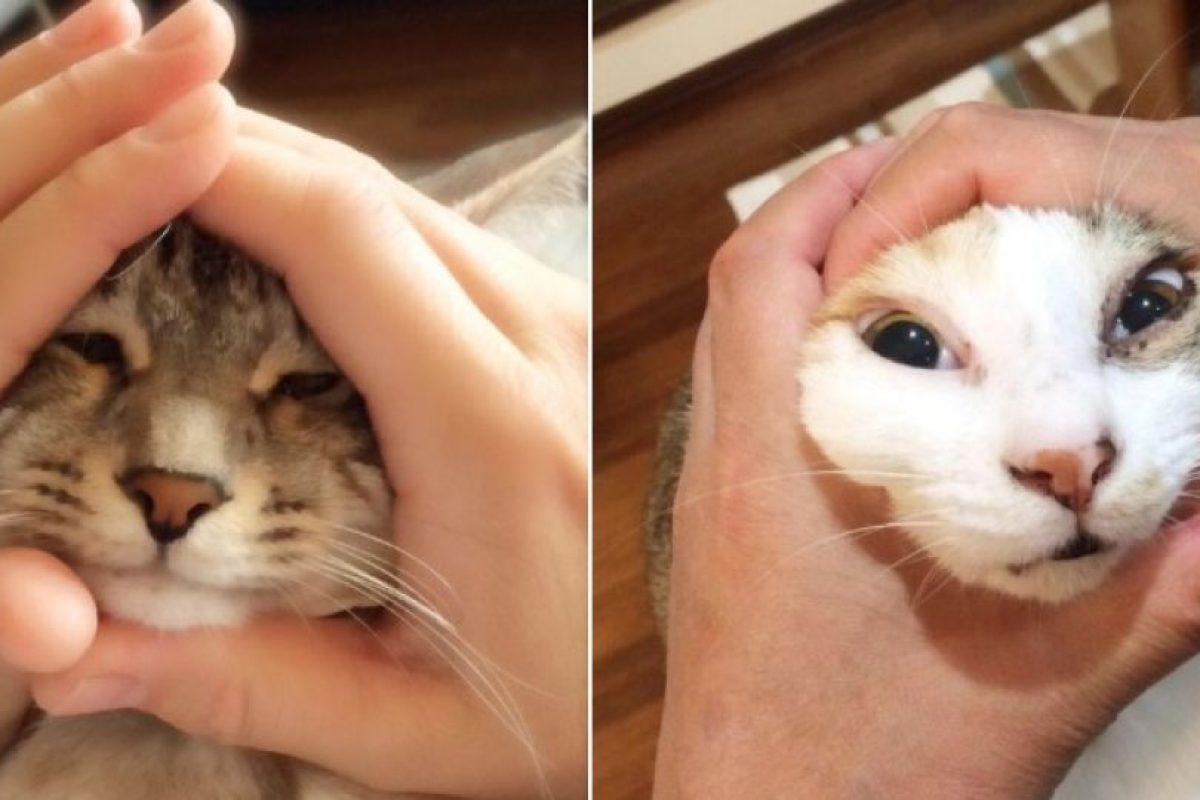 También aplica para gatos Foto:Vía Twitter/#riceball. Imagen Por: