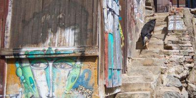 """Valparaíso: condenan a perro a """"cadena perpetua"""" tras morder a comerciante"""