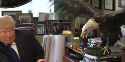 ¿Karma? Águila ataca a Donald Trump en plena sesión con la revista Time