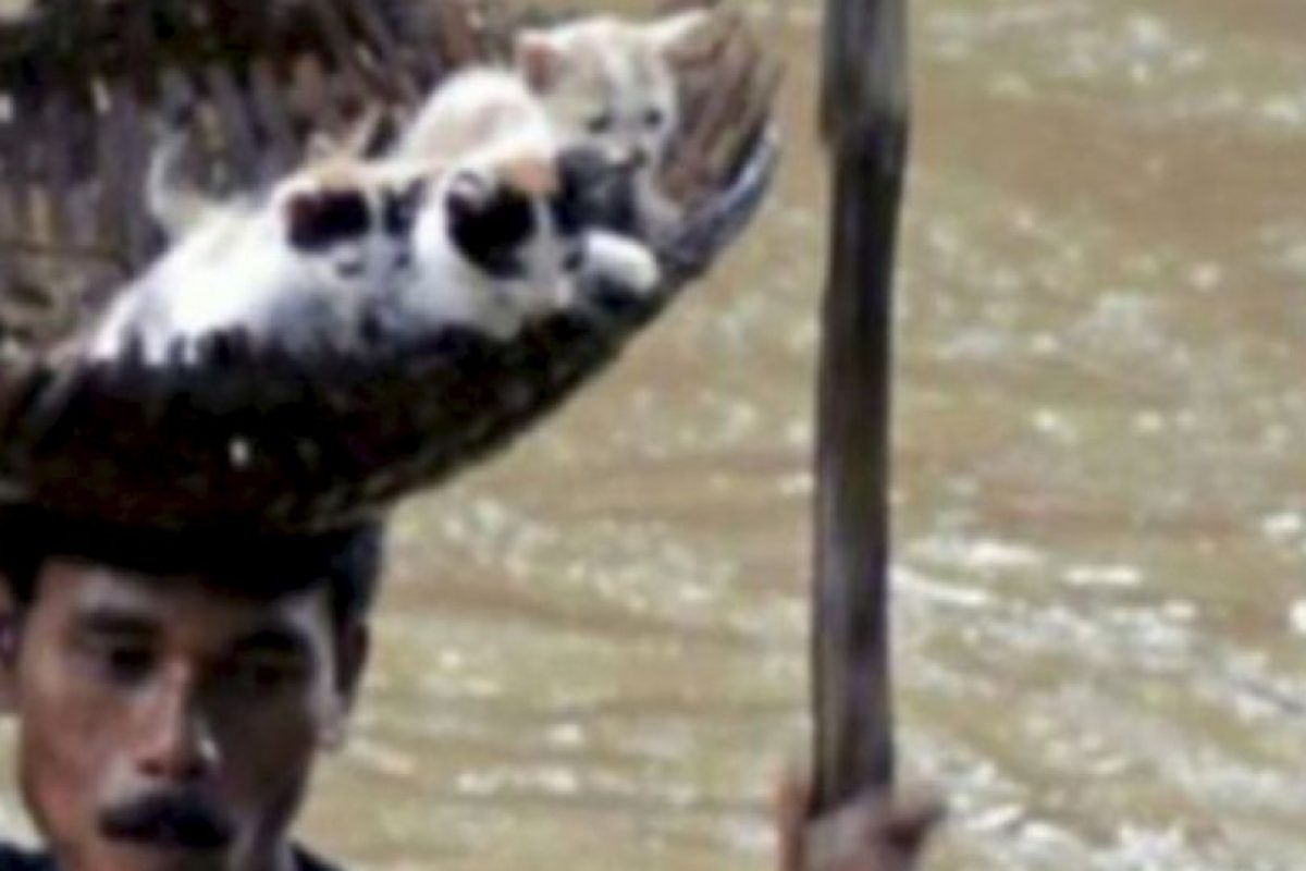 Este hombre salva a unos gatitos de una inundación. Foto:vía AFP. Imagen Por: