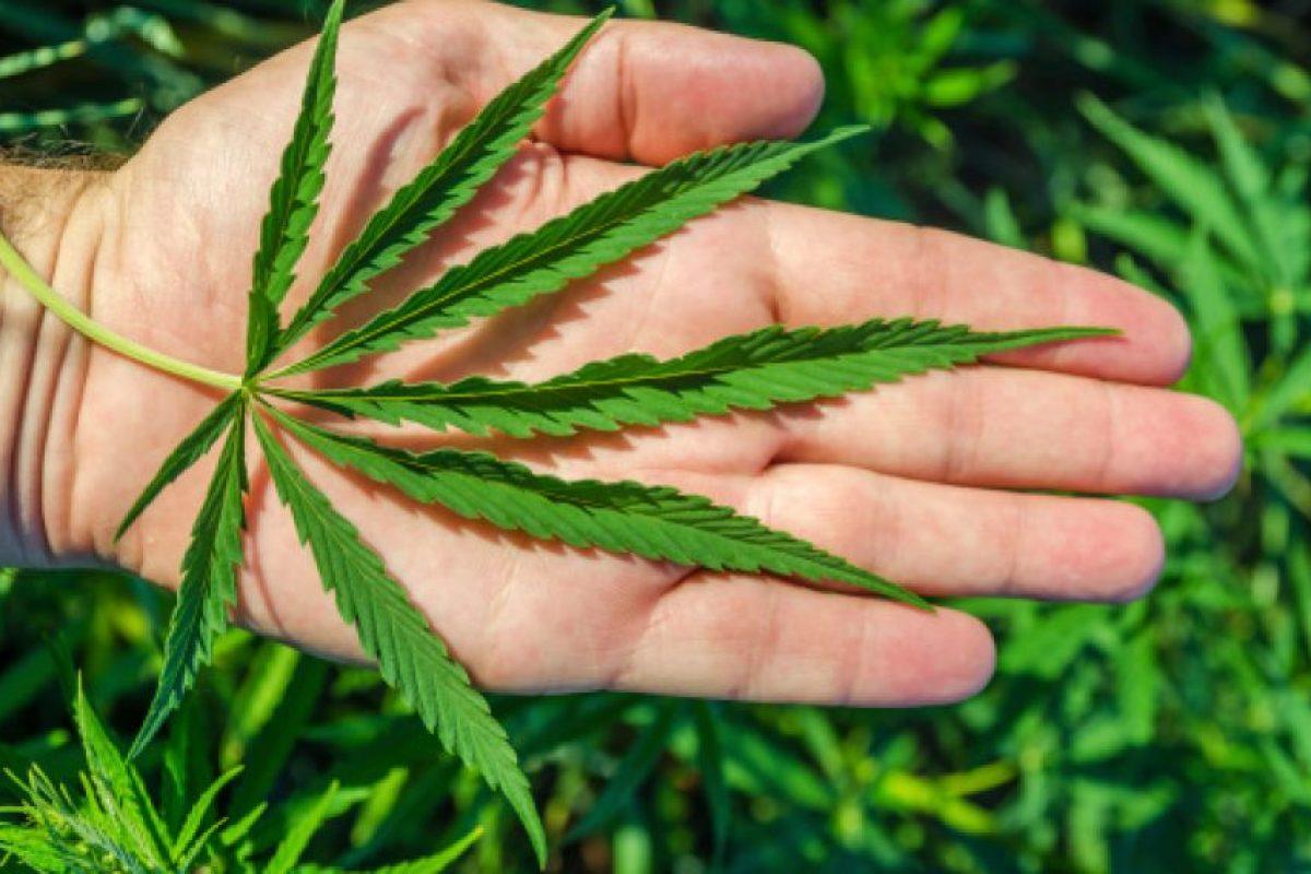Hoja de marihuana. Foto:Thinkstockphotos.es. Imagen Por: