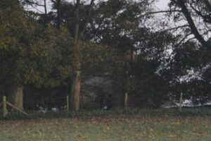 ¿Ya descubrieron lo que hay entre los árboles? Foto:Vía Jimie Brassington/Expressandstar. Imagen Por:
