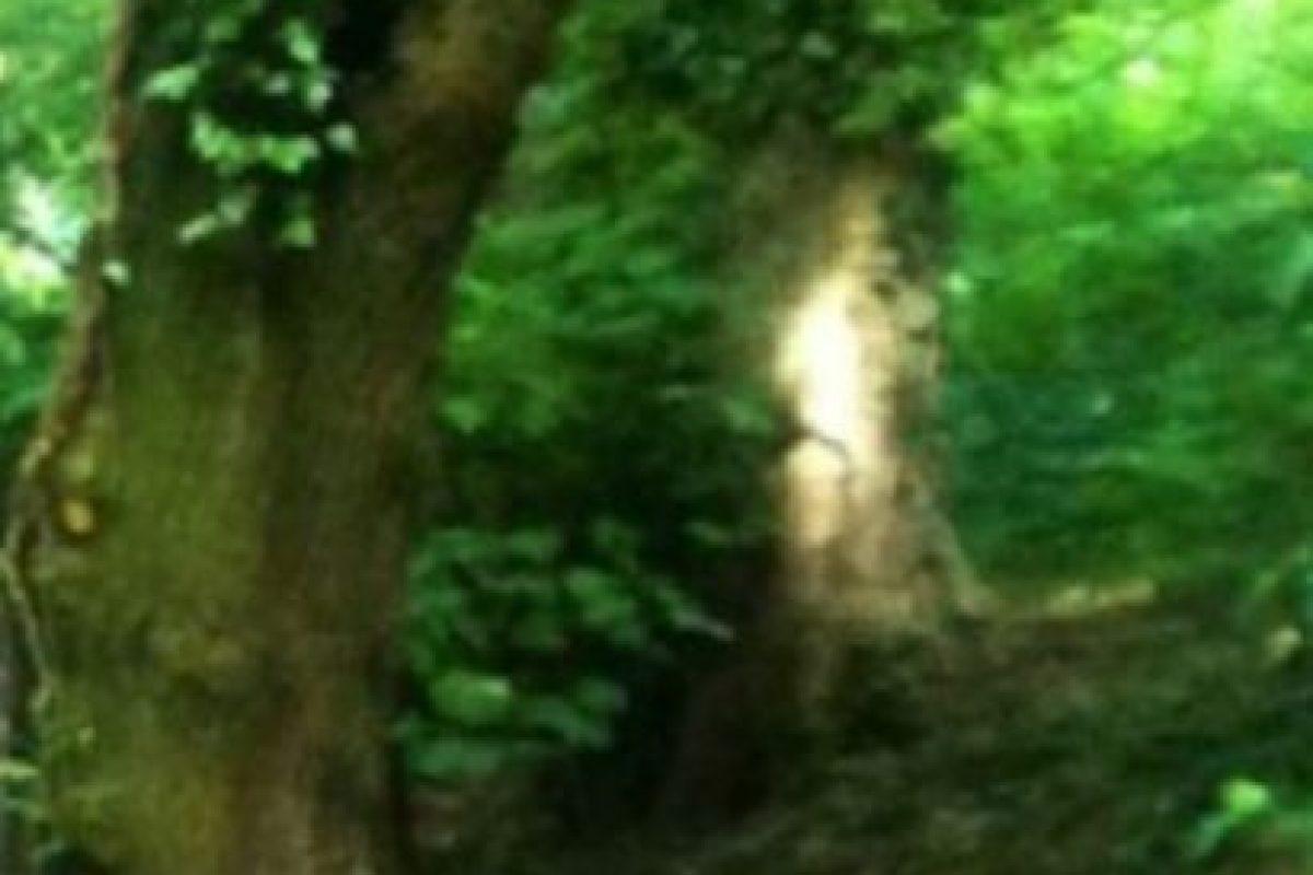 La persona que fotografío este árbol, asegura que se trata de la figura de un niño. Foto:Birminghamhistory. Imagen Por: