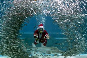 Buzo vestido de Santa Claus en Corea del Norte. Foto:AFP. Imagen Por: