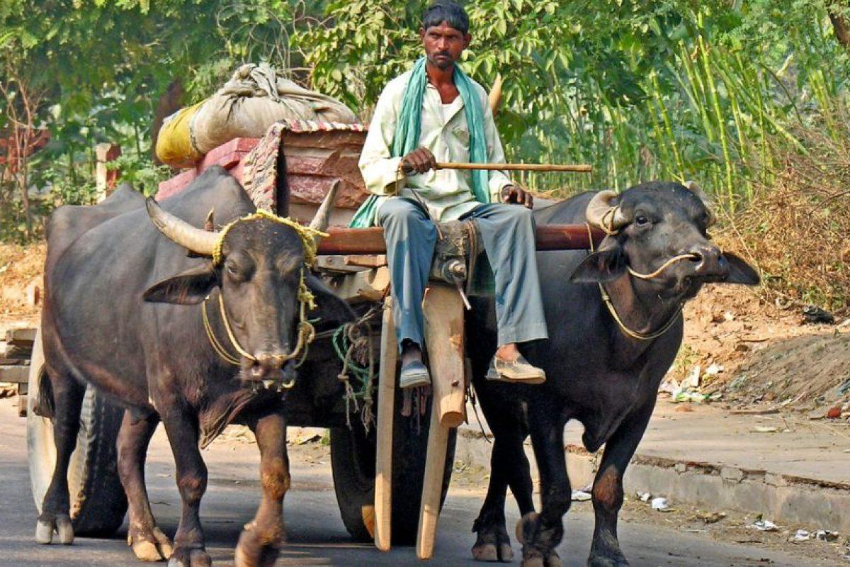 4. Hindi Foto:Vía Flickr. Imagen Por: