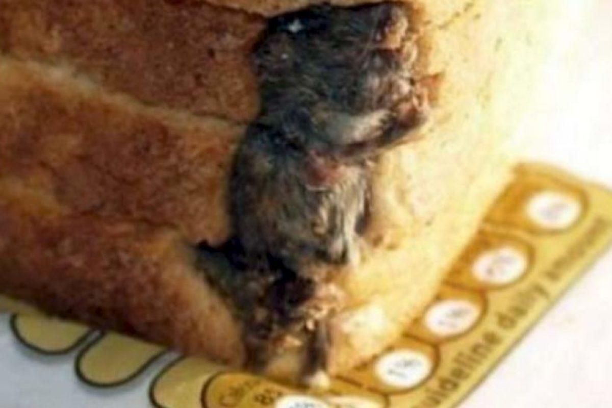 Rata empanizada. Foto:vía EpicFail. Imagen Por: