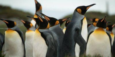 Chileno viajó 8 horas con la idea de fotografiar pingüinos y este fue el resultado
