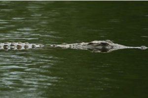 Las autoridades encontraron el cuerpo de Matthew Riggins en el lago Barefoot Bay y según explicaron se ahogó como consecuencia de un ataque de un reptil. Foto:Getty Images. Imagen Por: