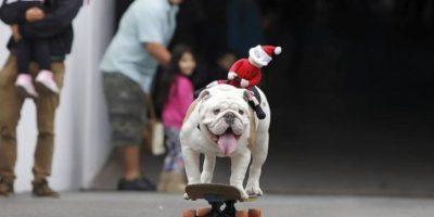 Otto: el bulldog skater compite ahora como perro deportista del año