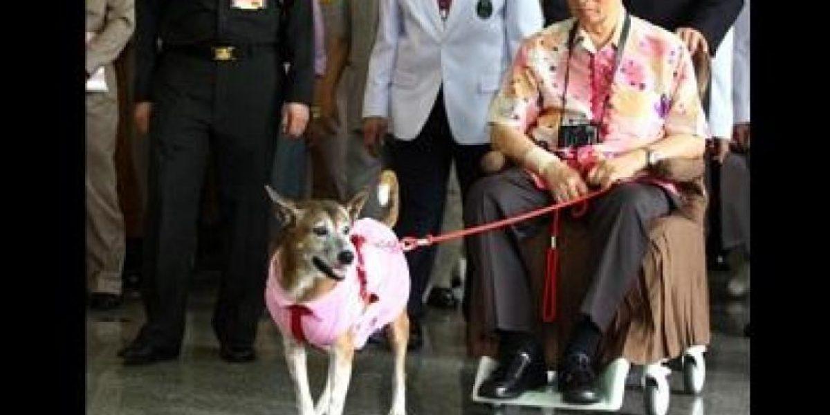 ¡Qué cacho! Tailandés arriesga hasta 37 años de cárcel por burlas sobre perro del rey