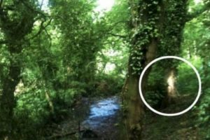 Después de haber captado las imágenes en un bosque de Birmingham, en Reino Unido, con su smartphone, llegó a casa y al revisarlas se percató de una figura extraña en un árbol. Foto:Birminghamhistory. Imagen Por: