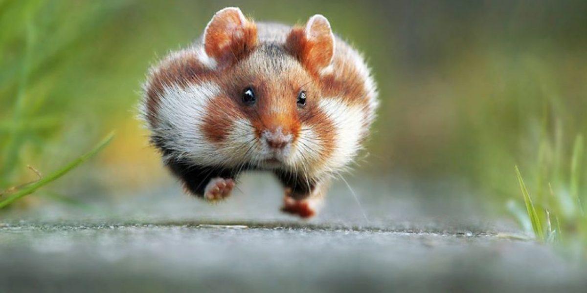 Comedy Wildlife 2015: estas son las fotos de animales más divertidas del año