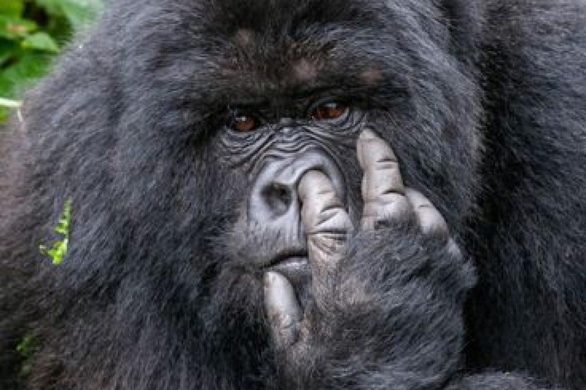 Foto:Comedy Wildlife 2015. Imagen Por: