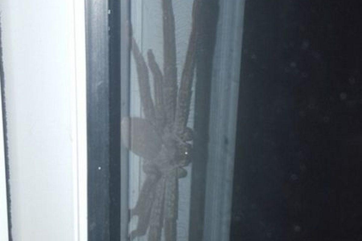 Esta imagen en Reddit se hizo viral. Es una araña cazadora de gran tamaño que se escondía en una casa. No es peligrosa para los humanos, pero se compartió miles de veces. Foto:vía Reddit.. Imagen Por: