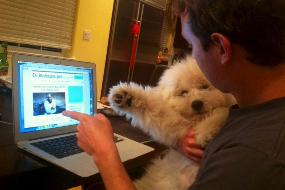 """Estas son las fotos de Facebook que Beast, la mascota de Mark Zuckerberg """"publica"""" en Facebook. Foto:facebook.com/beast.the.dog/. Imagen Por:"""