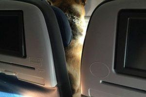 El perrito disfrutando del viaje en avión… en la cabina de pasajeros. Foto:Reproducción / dailymail.co.uk. Imagen Por: